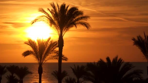 Zobrazit prostřednictvím palmy při východu slunce
