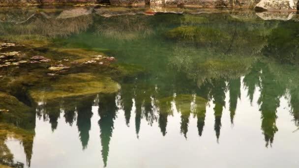 Odraz z cypřiše v rybníku