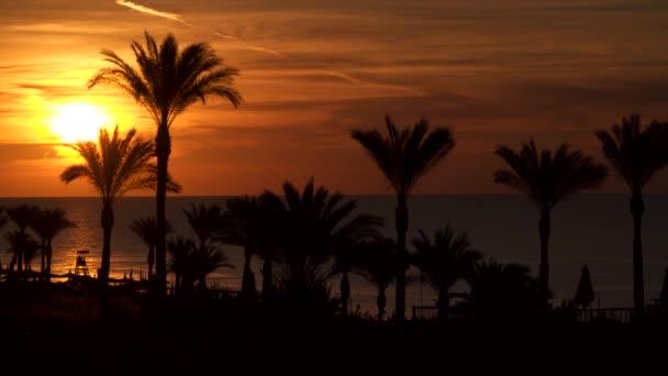 Palmy na pláži pozadí vycházejícího slunce