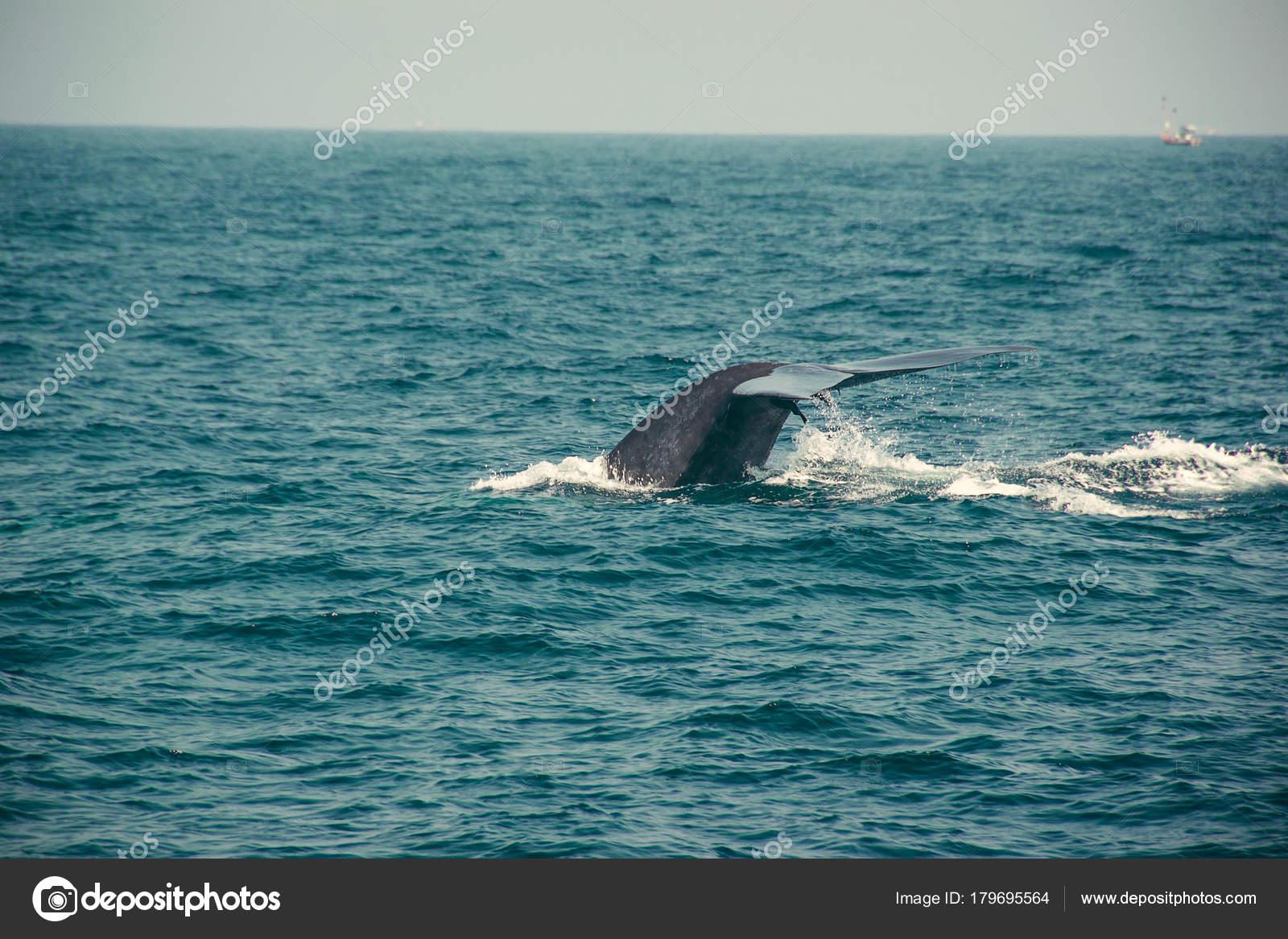 Dünyanın en derin okyanusu