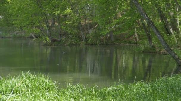 rybník v lese