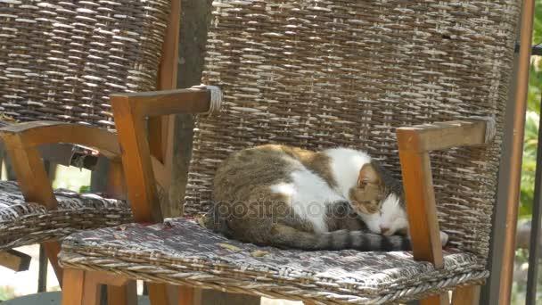 Katze schlafend im Sessel