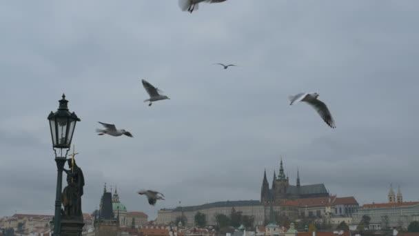 Letící racky nad pražských středověkých Karlův most.