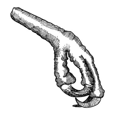 Bird foot sketch