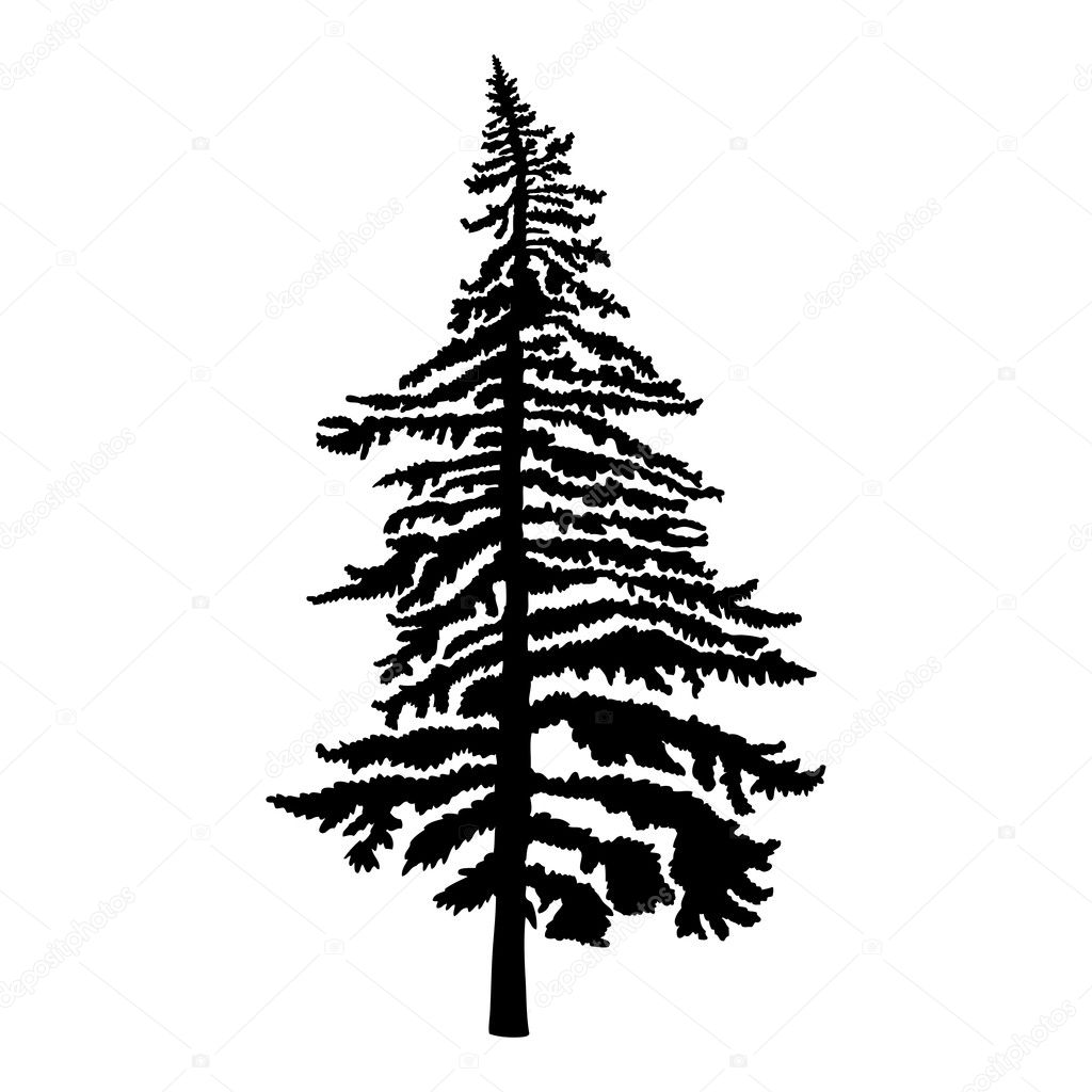 Pine tree silhouette — Stock Photo © goldenshrimp #125908372