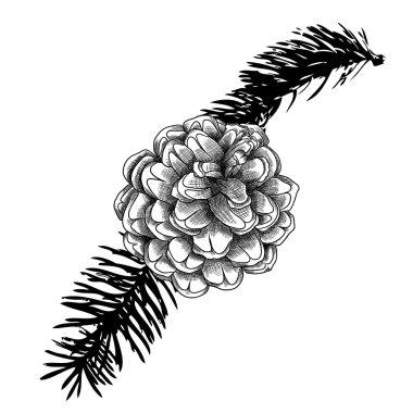 Hand drawn pine cone sketch