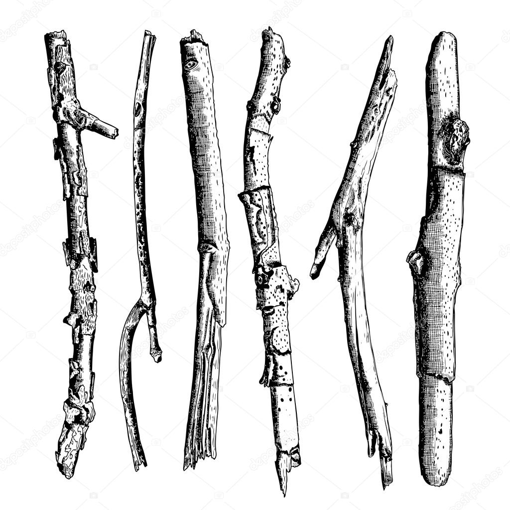 Set Of Detailed And Precise Ink Drawing Wood Twigs Forest Collection Natural Tree Branches Sticks Hand Drawn Driftwoods Pickups Bundle Rustic