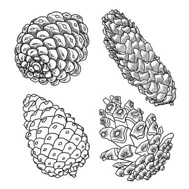 Set of pine cones sketches