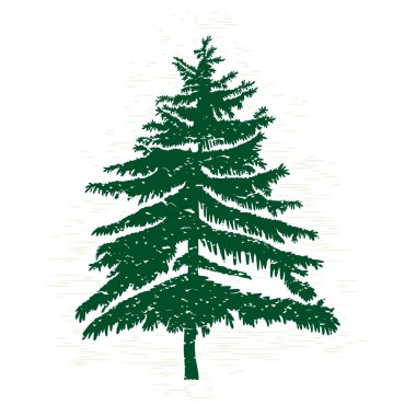 Hand drawn textured fir tree