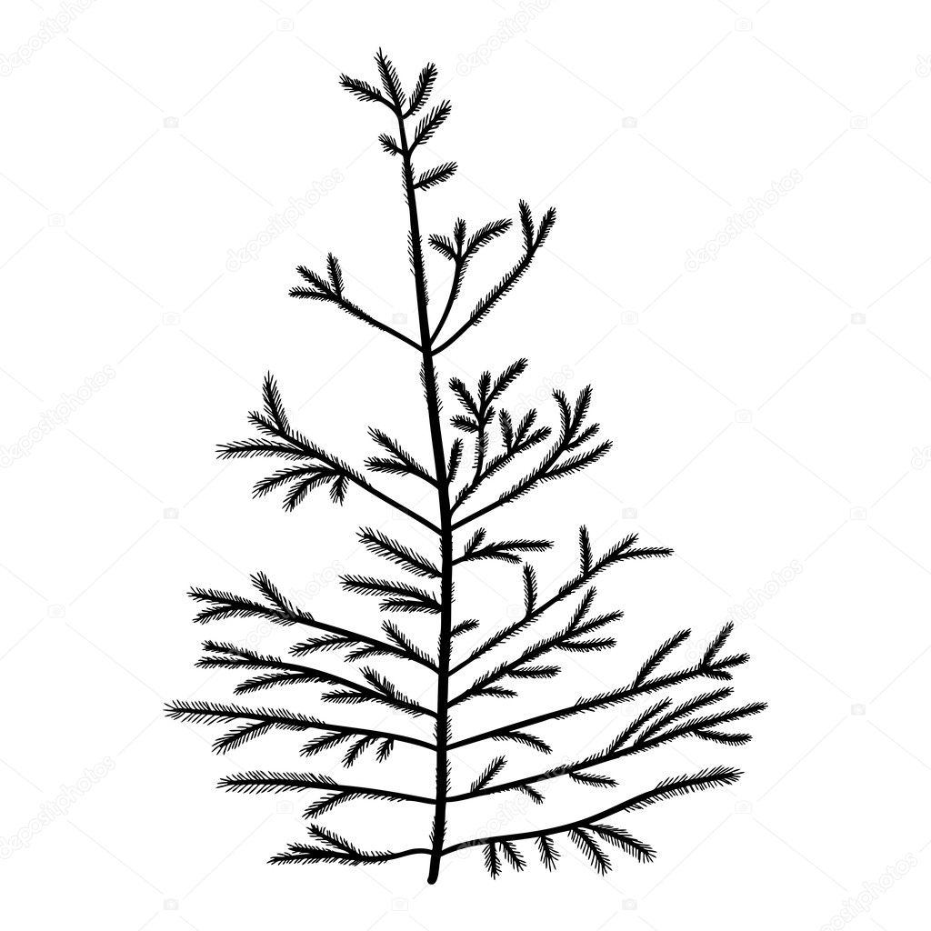 hand drawn textured fir tree stock photo goldenshrimp 126328056  hand drawn textured fir tree stock photo
