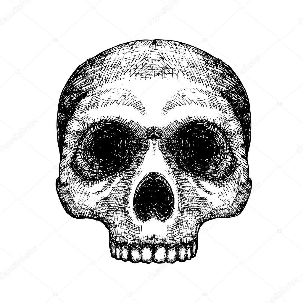 hand drawing skull human skull sketch black and white illustration of skull hand drawn witchcraft magic occult voodoo attribute decorative element