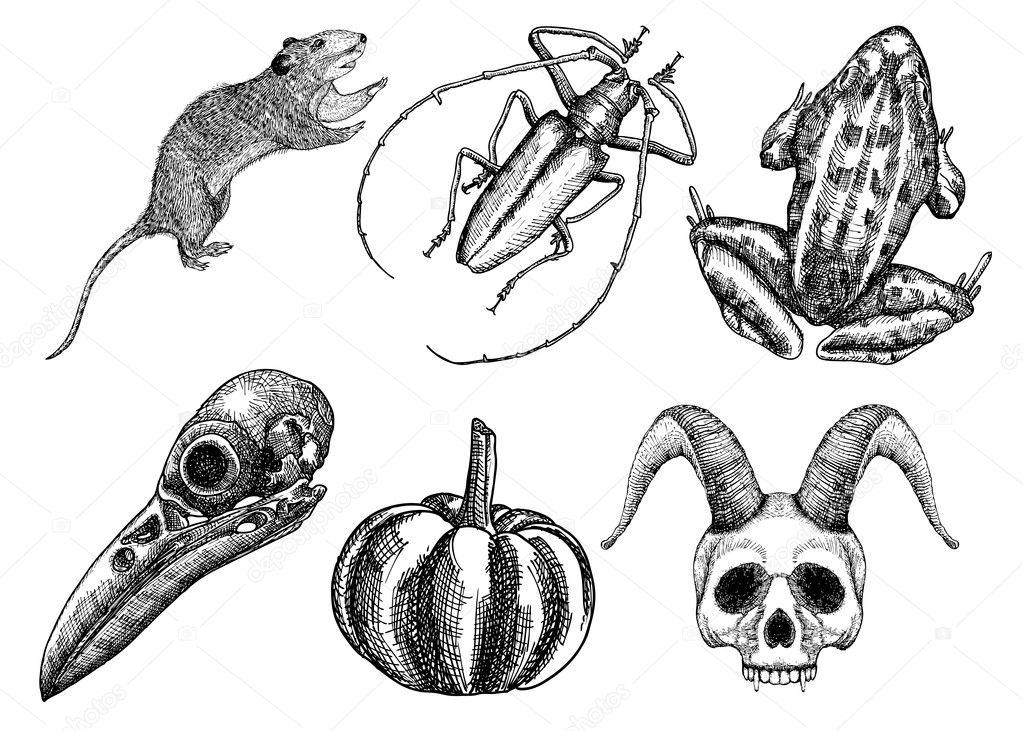 Set Of Sketches For Halloween Stock Vector C Goldenshrimp 126899826
