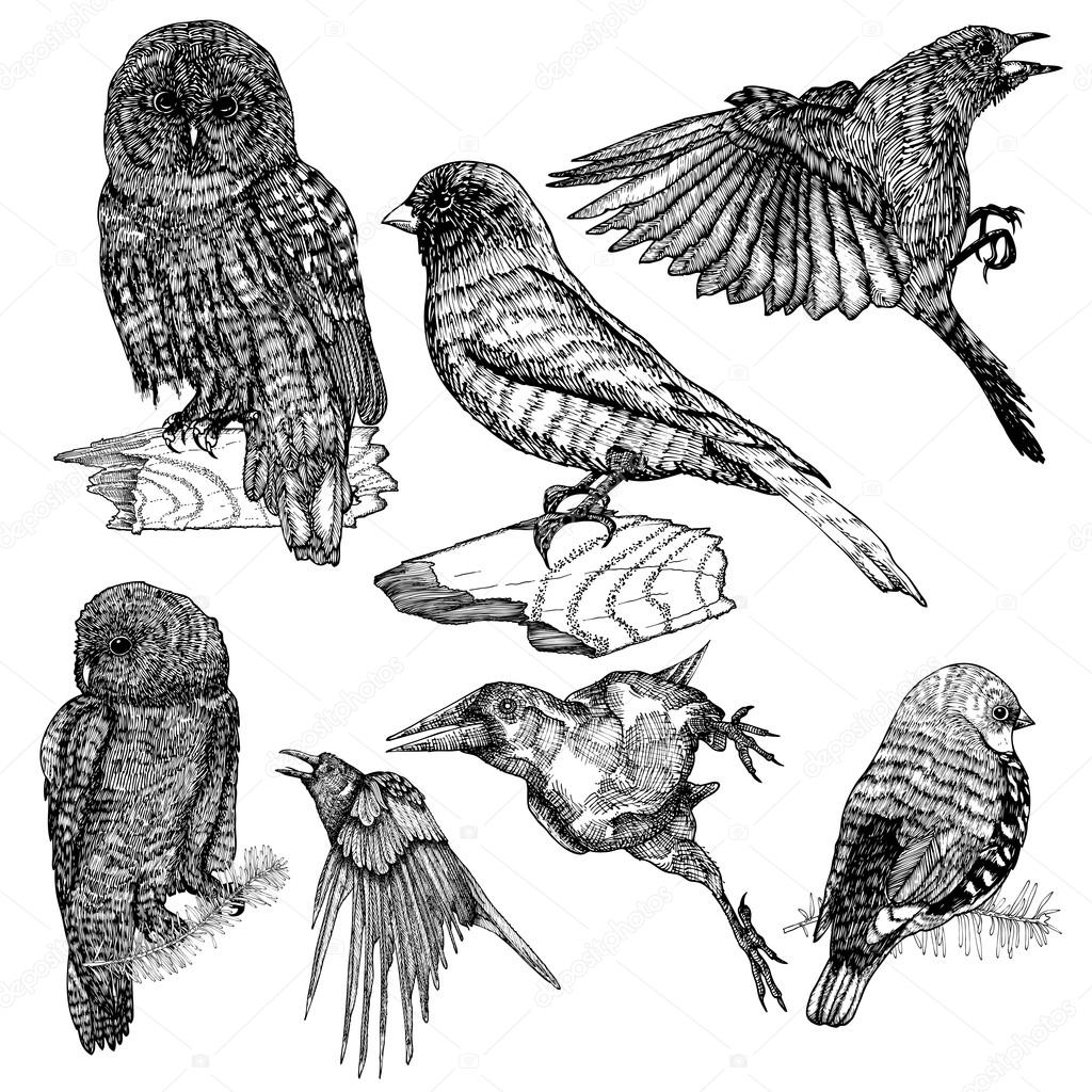 Set of birds sketches stock vector
