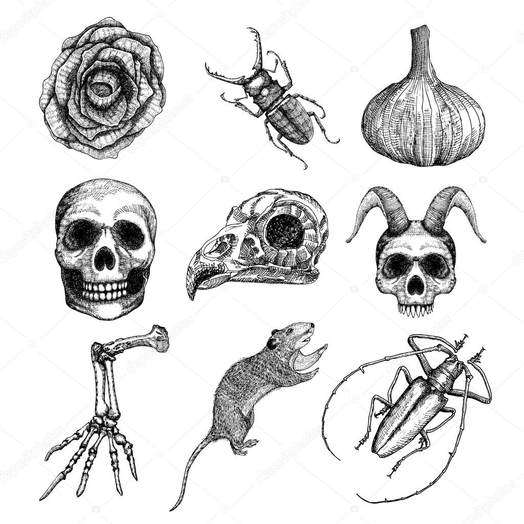Set of witchcraft magic Halloween attributes