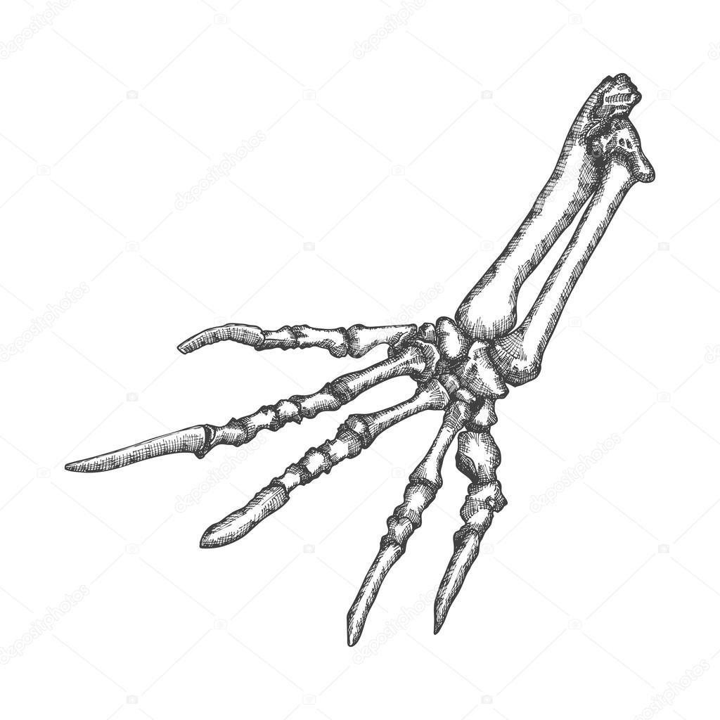 Hagedis beenderen van de schets van de hand — Stockfoto ...