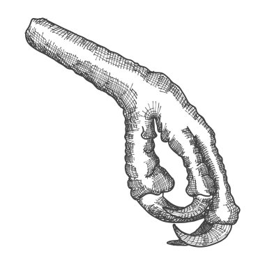 Bird's foot sketch