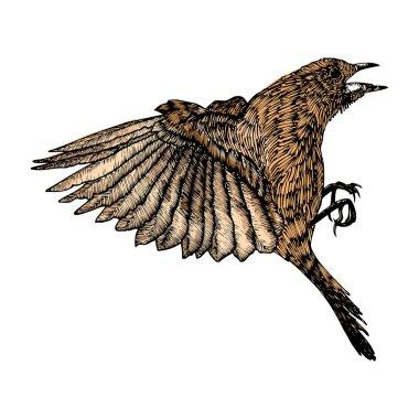 Bird ink line drawing