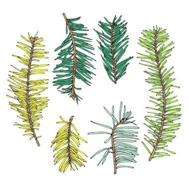 Collection of hand drawn conifers