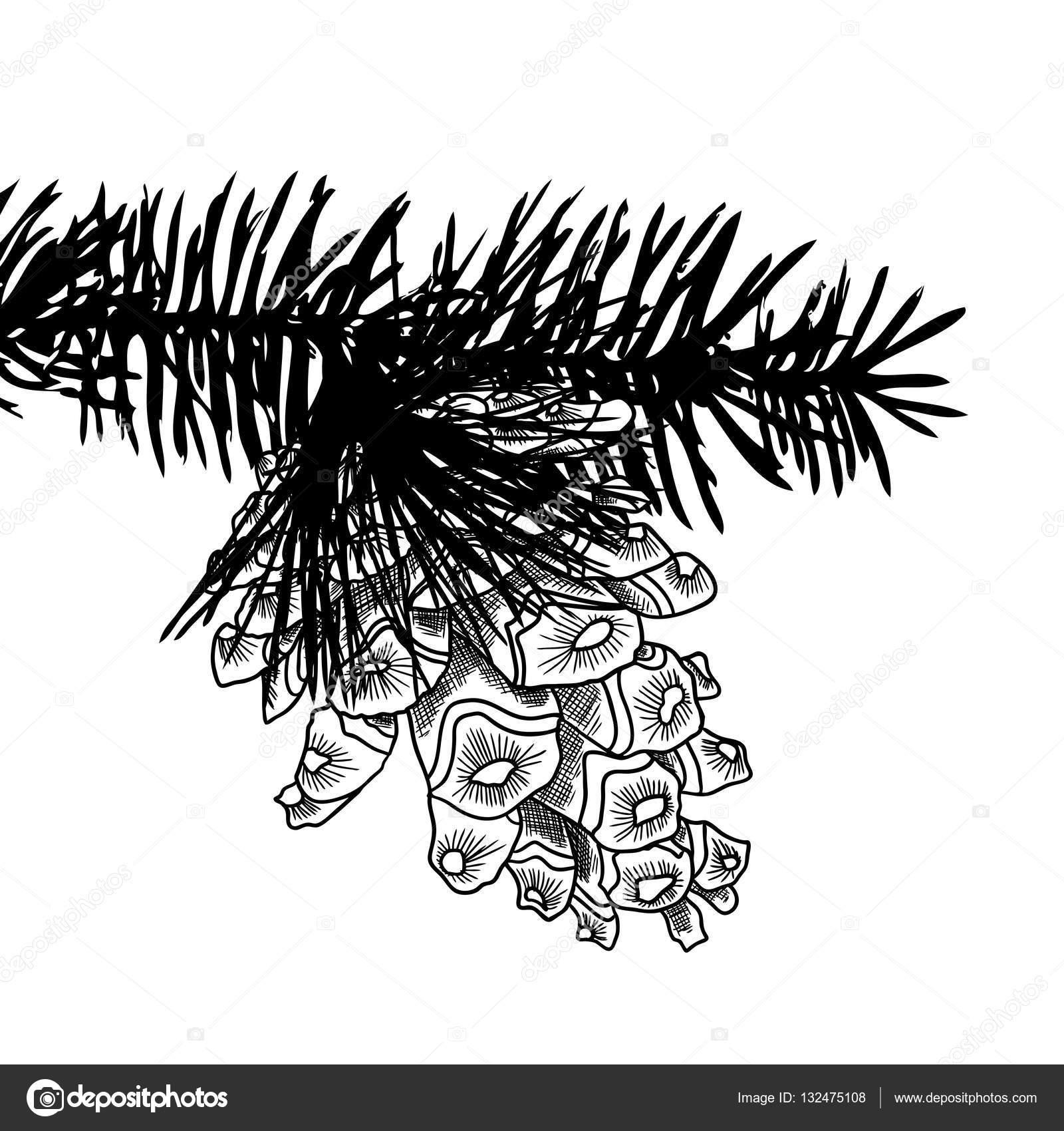 Cono de pino dibujo mano — Fotos de Stock © goldenshrimp #132475108
