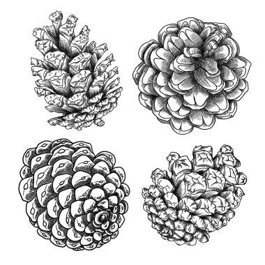 Set of drawings of pine cones