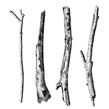Hand drawn wood twig set