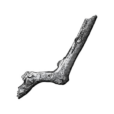 Hand drawn branch