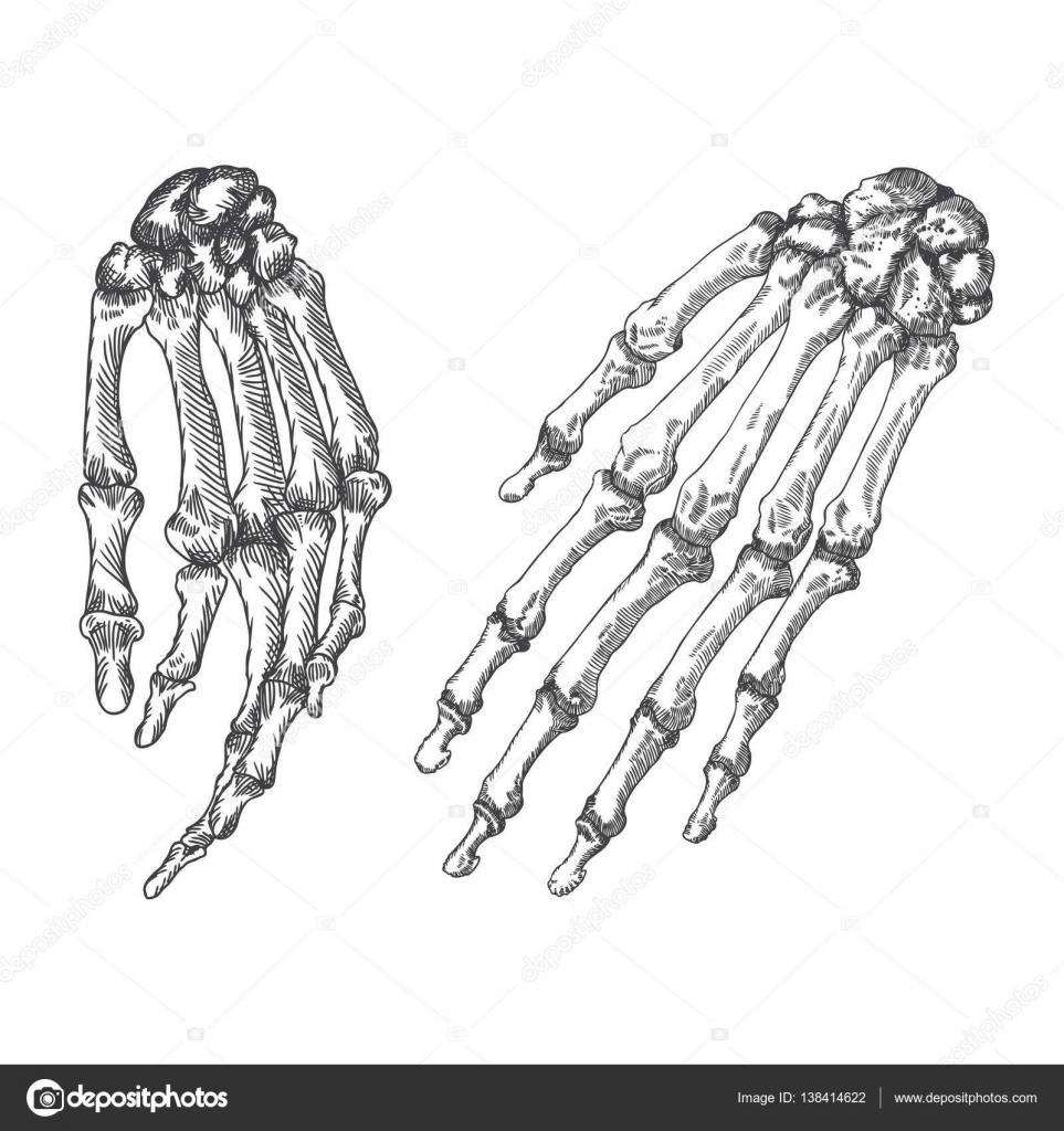 Muñecas esqueleto humano huesos dibujo — Vector de stock ...
