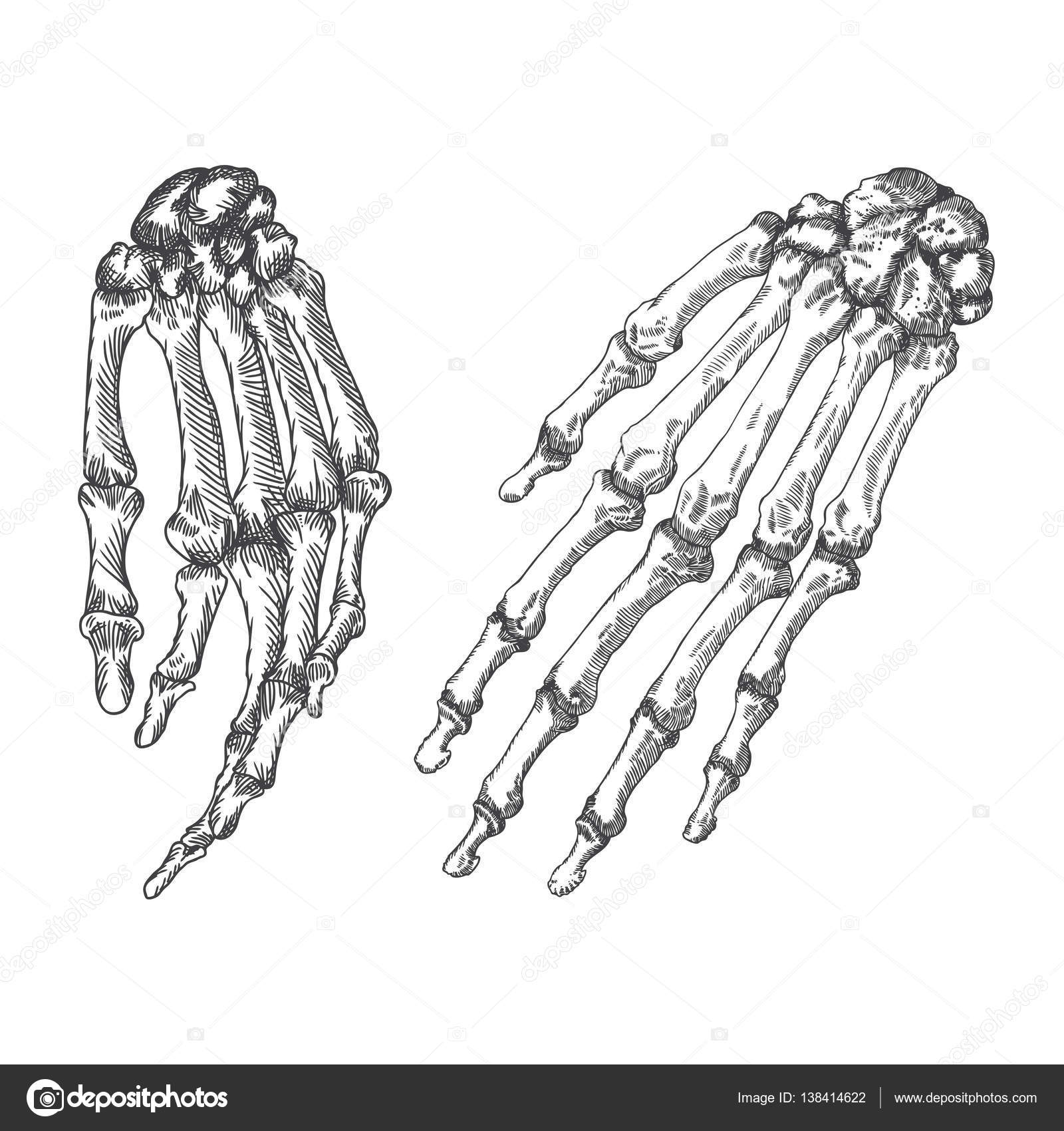 Muñecas esqueleto humano huesos dibujo — Archivo Imágenes ...