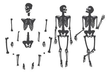 Human skeleton set