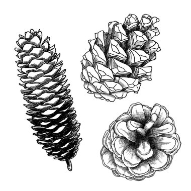 Set of hand drawn pine cones