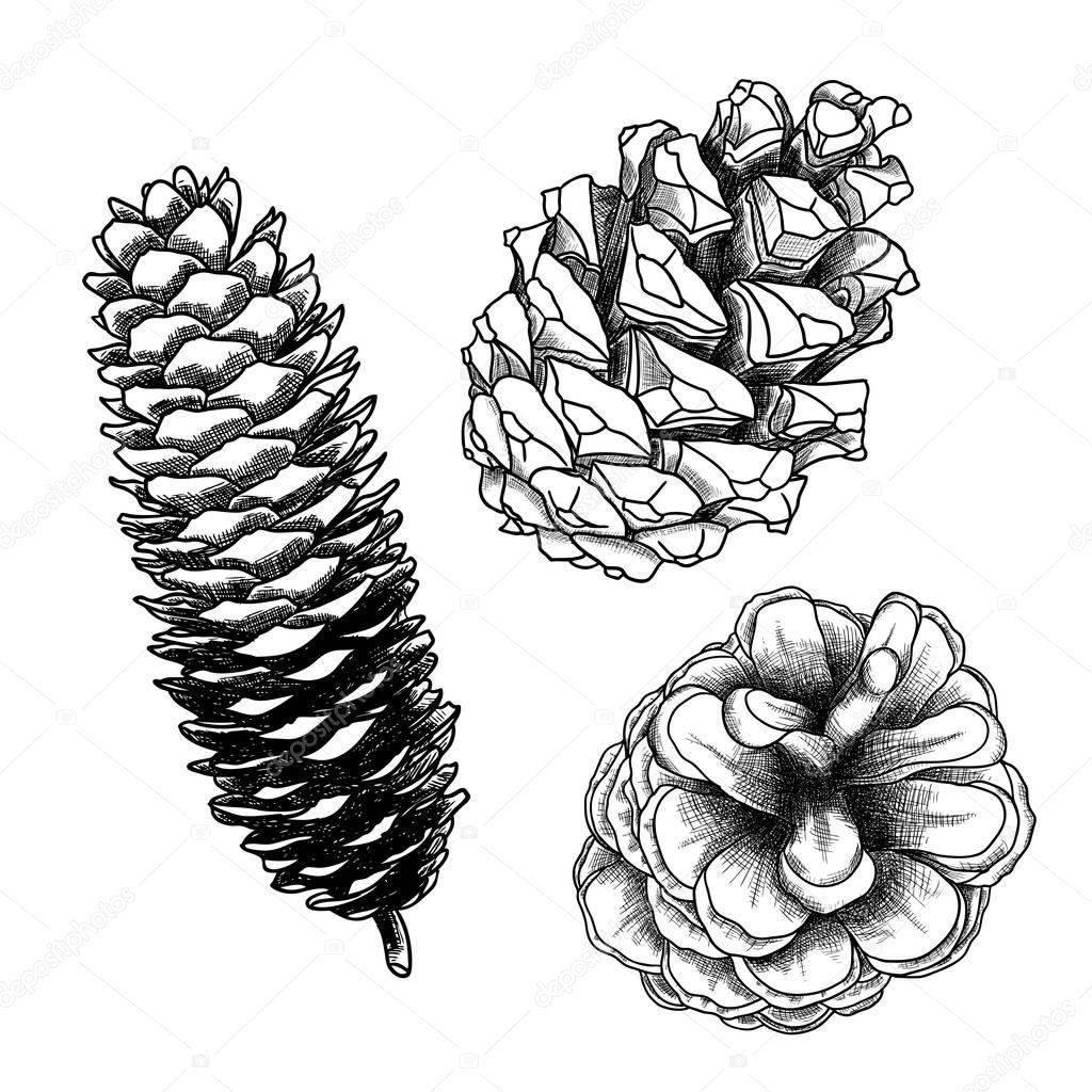 conjunto de cones do pinho m o desenhada vetor de stock. Black Bedroom Furniture Sets. Home Design Ideas