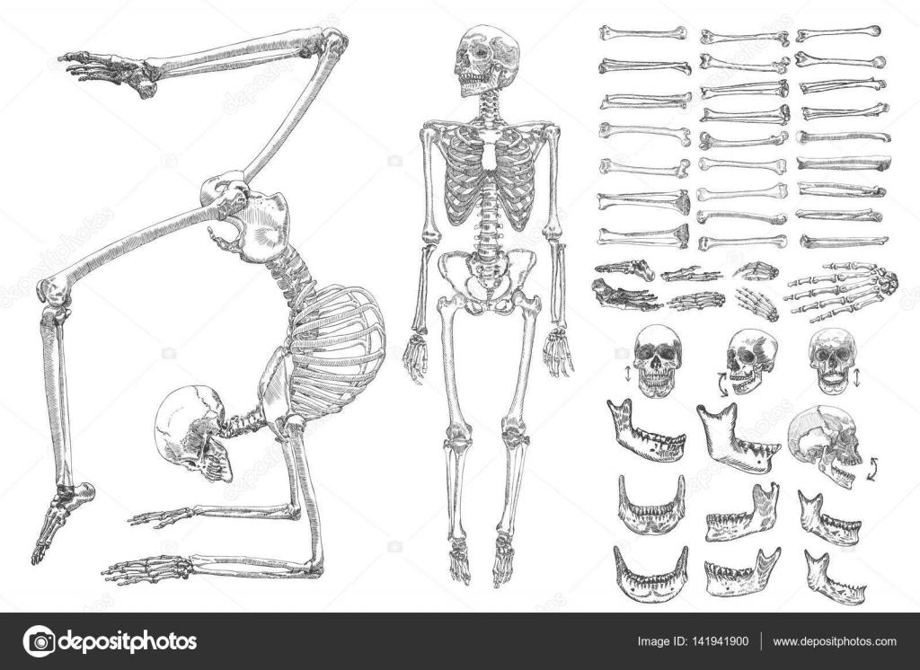 Menschliche Knochen Skelett Sammlungssatz — Stockvektor ...
