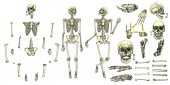 Lidské kosti kostry kolekce sada