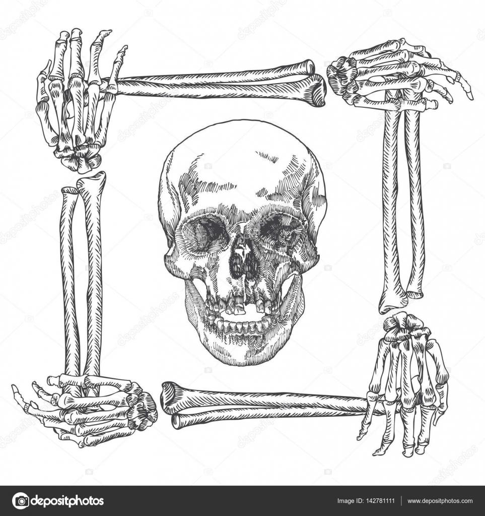 Cranio Na Moldura Feita De Ossos De Maos Vetores De Stock