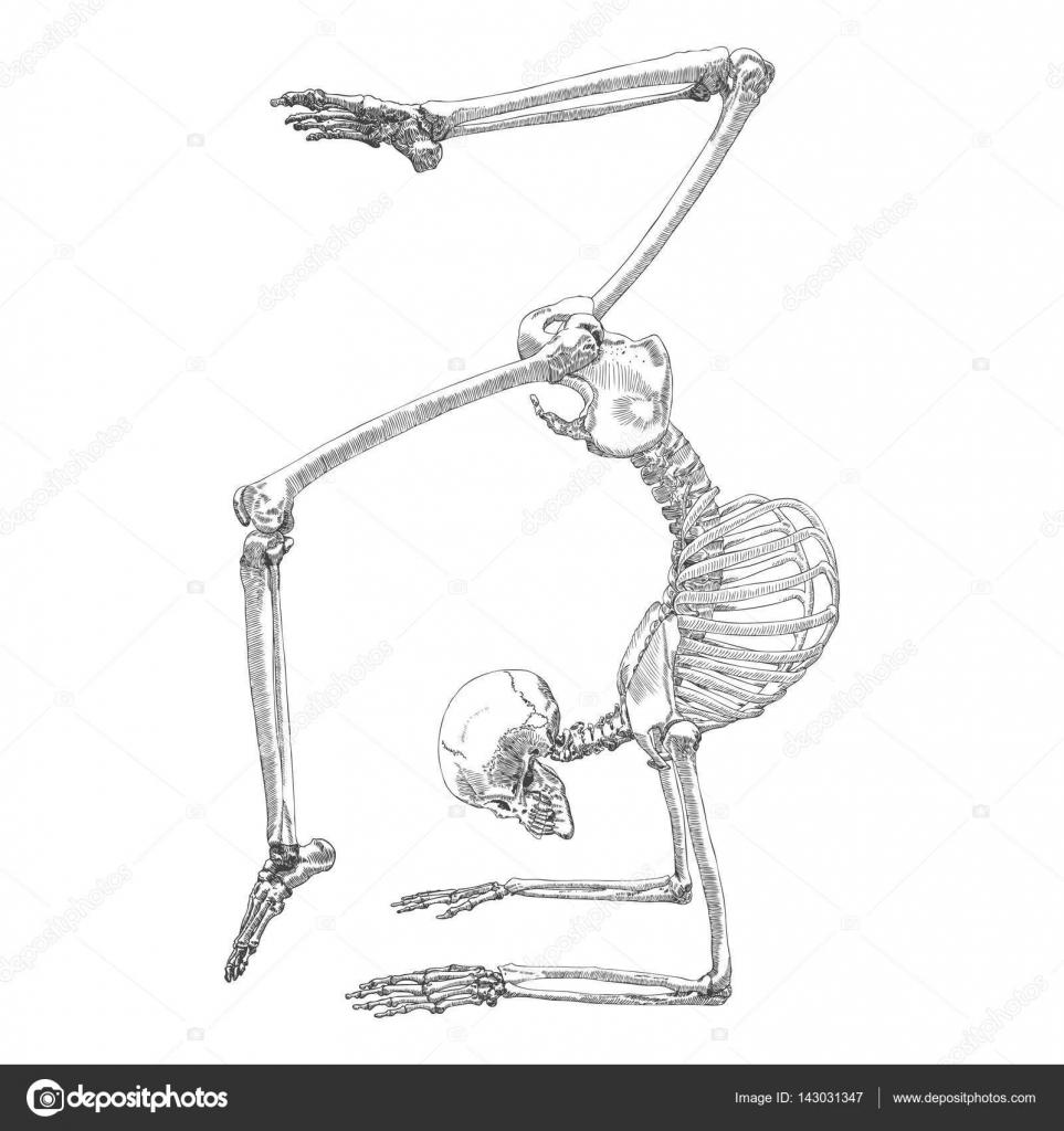 Dibujo de esqueleto de huesos humanos — Archivo Imágenes Vectoriales ...