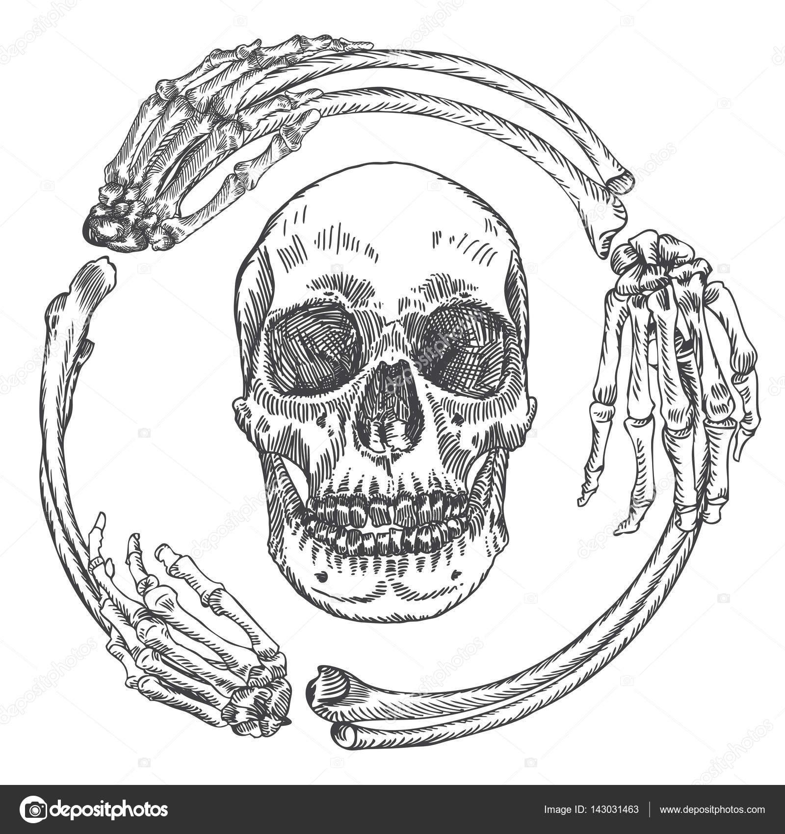 Schädel im Rahmen der Knochen — Stockvektor © goldenshrimp #143031463