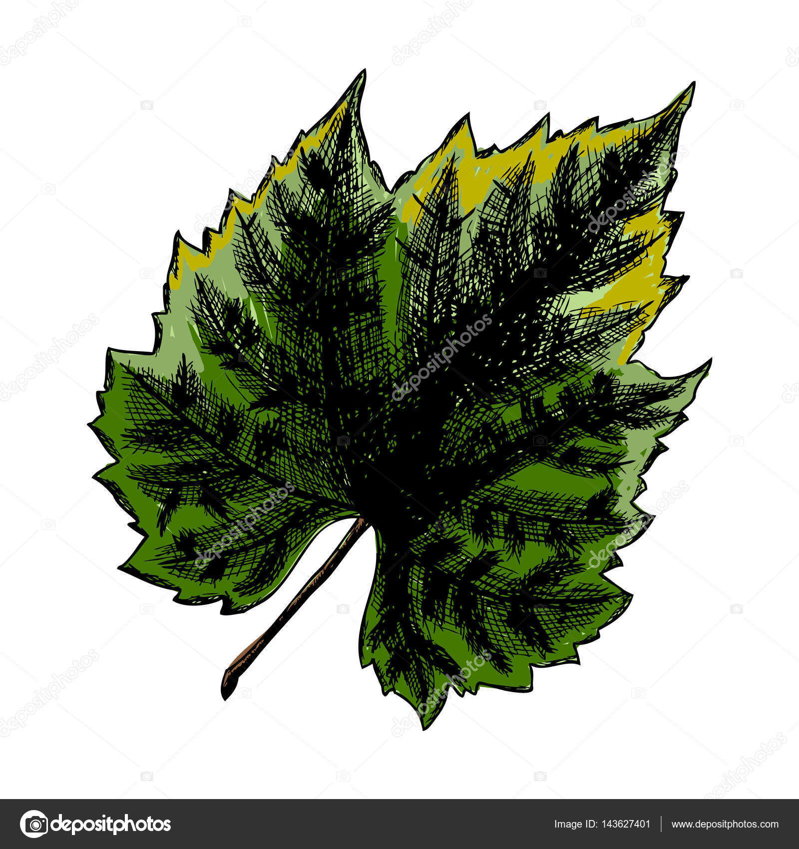 Inked Drawing Of Grape Leaf Stock Photo C Goldenshrimp 143627401