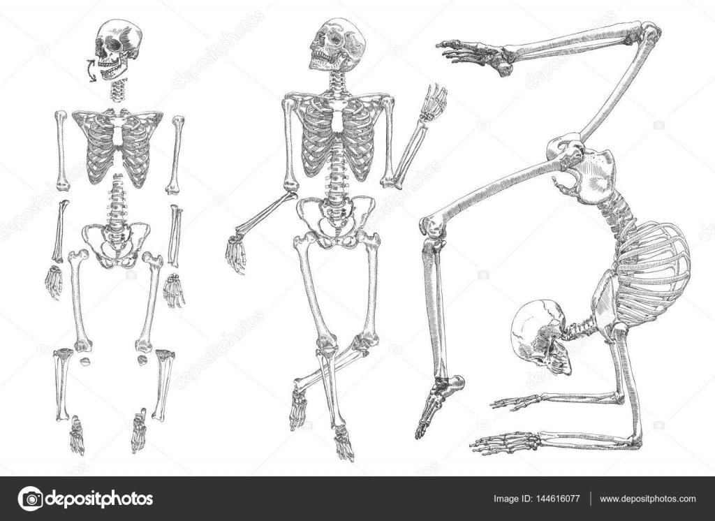 Conjunto de dibujos esqueleto humano — Archivo Imágenes Vectoriales ...