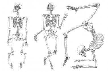 Human skeleton sketches set