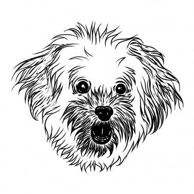 Bolognese puppy girl illustration