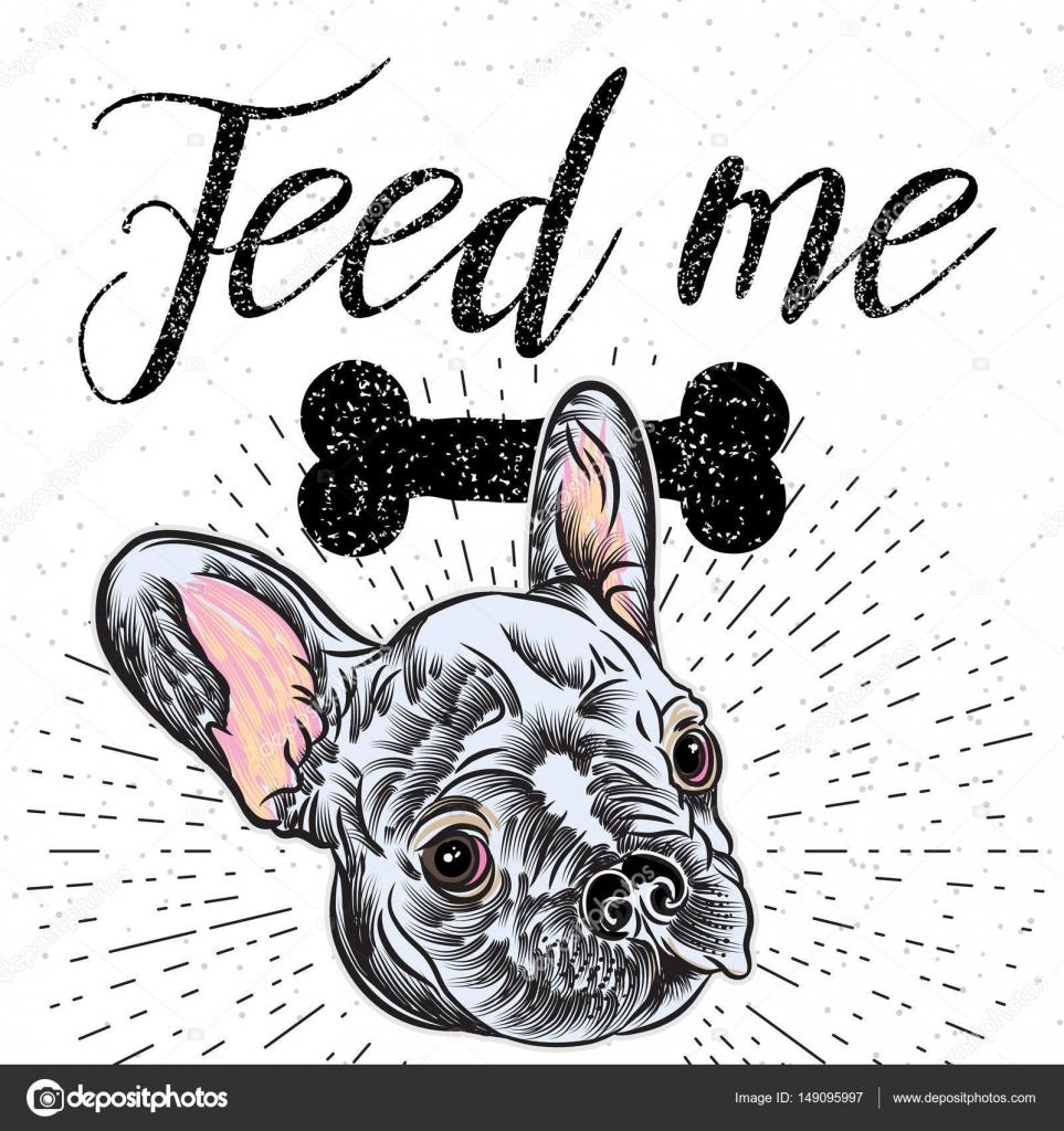 Französische Bulldogge Mit Futter Das Haustier Zeichen Stockvektor