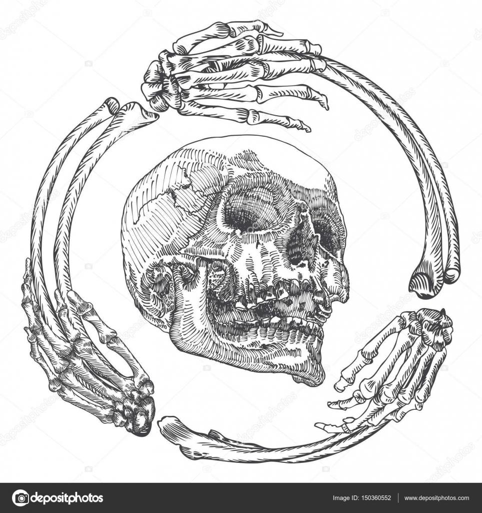 Skull in the frame made of hands bones — Stock Vector © goldenshrimp ...