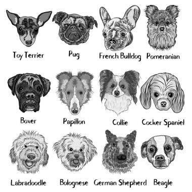Set of different dogs breeds