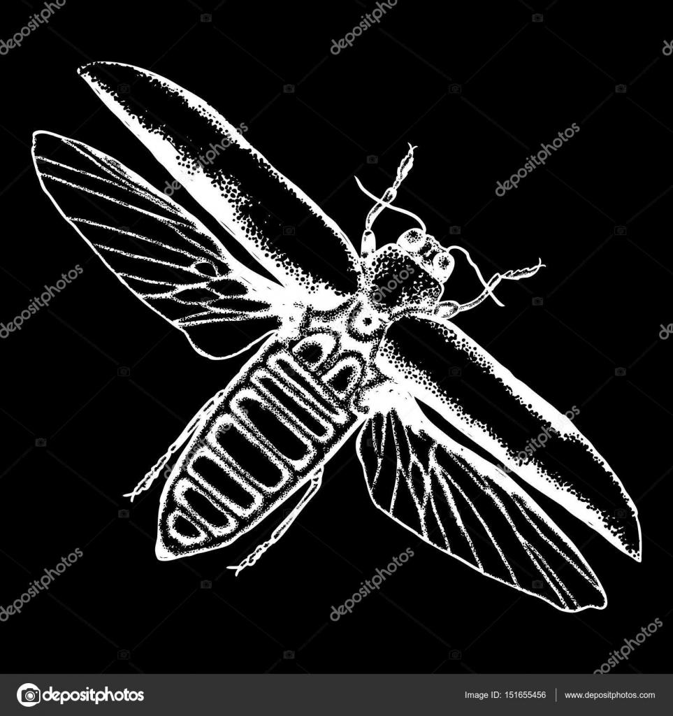 Skarabäus-Käfer zeichnen — Stockvektor © goldenshrimp #151655456
