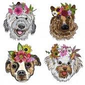 Fényképek Különböző típusú kutyák rajzfilm