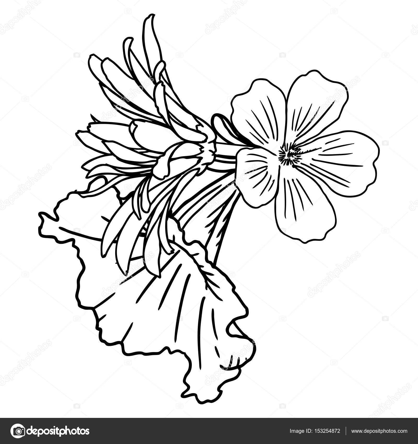 Vintage flower bouquet sketch — Stock Photo © goldenshrimp #153254872