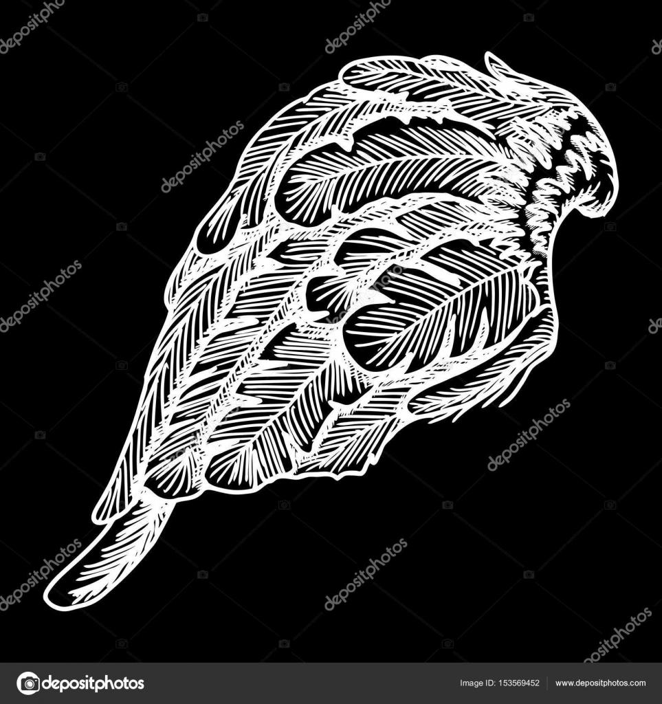 Hand drawn vintage bird wing — Stock Vector © goldenshrimp #153569452