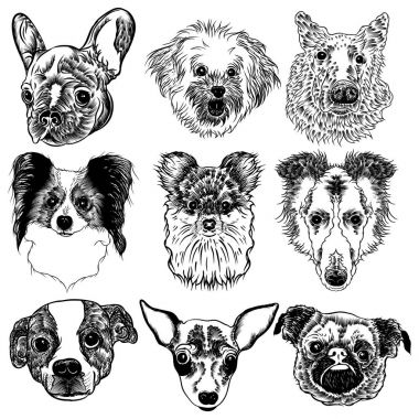 Collection of different dogs breeds