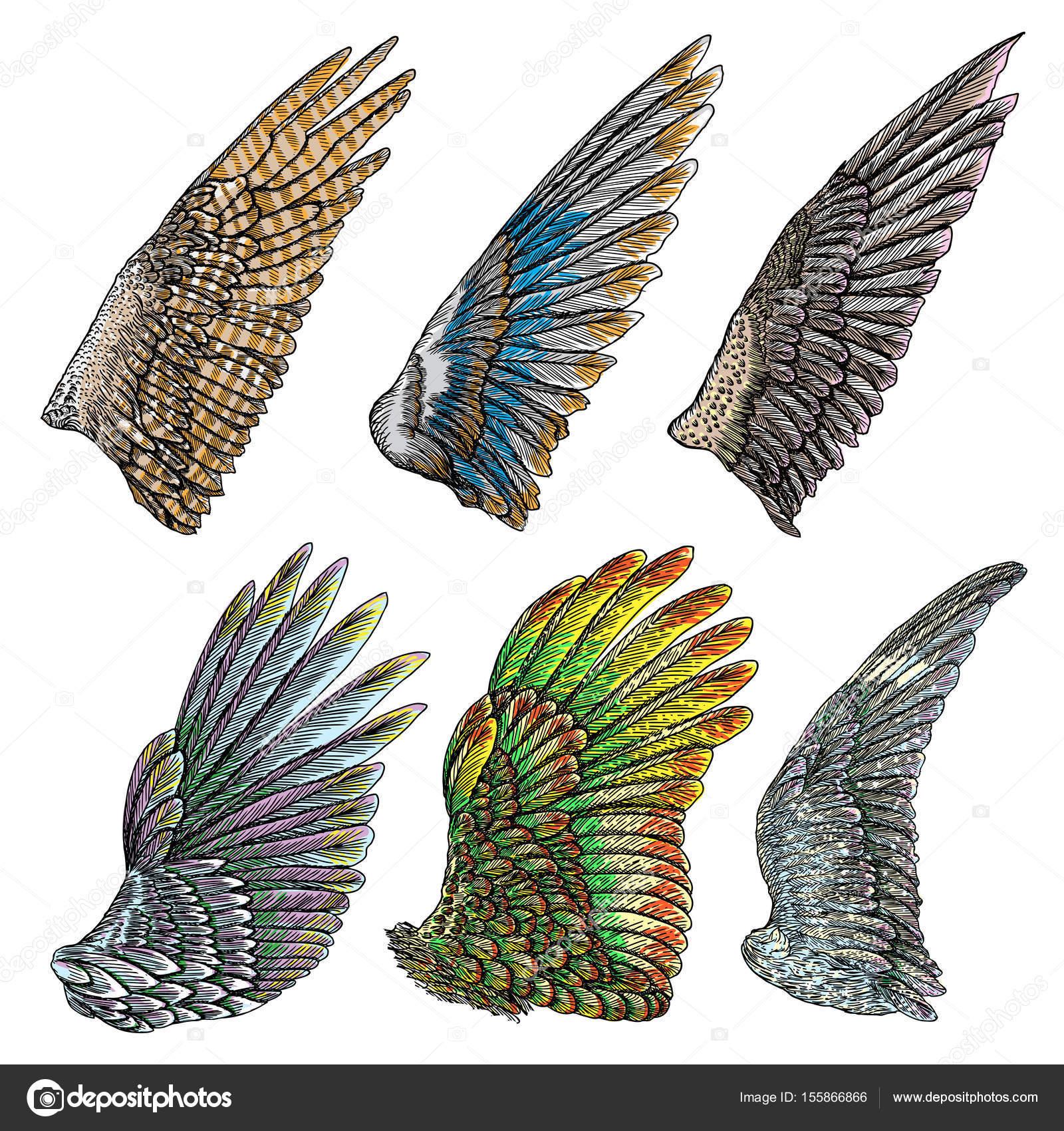 Satz von bunter Vogel Flügel — Stockvektor © goldenshrimp #155866866