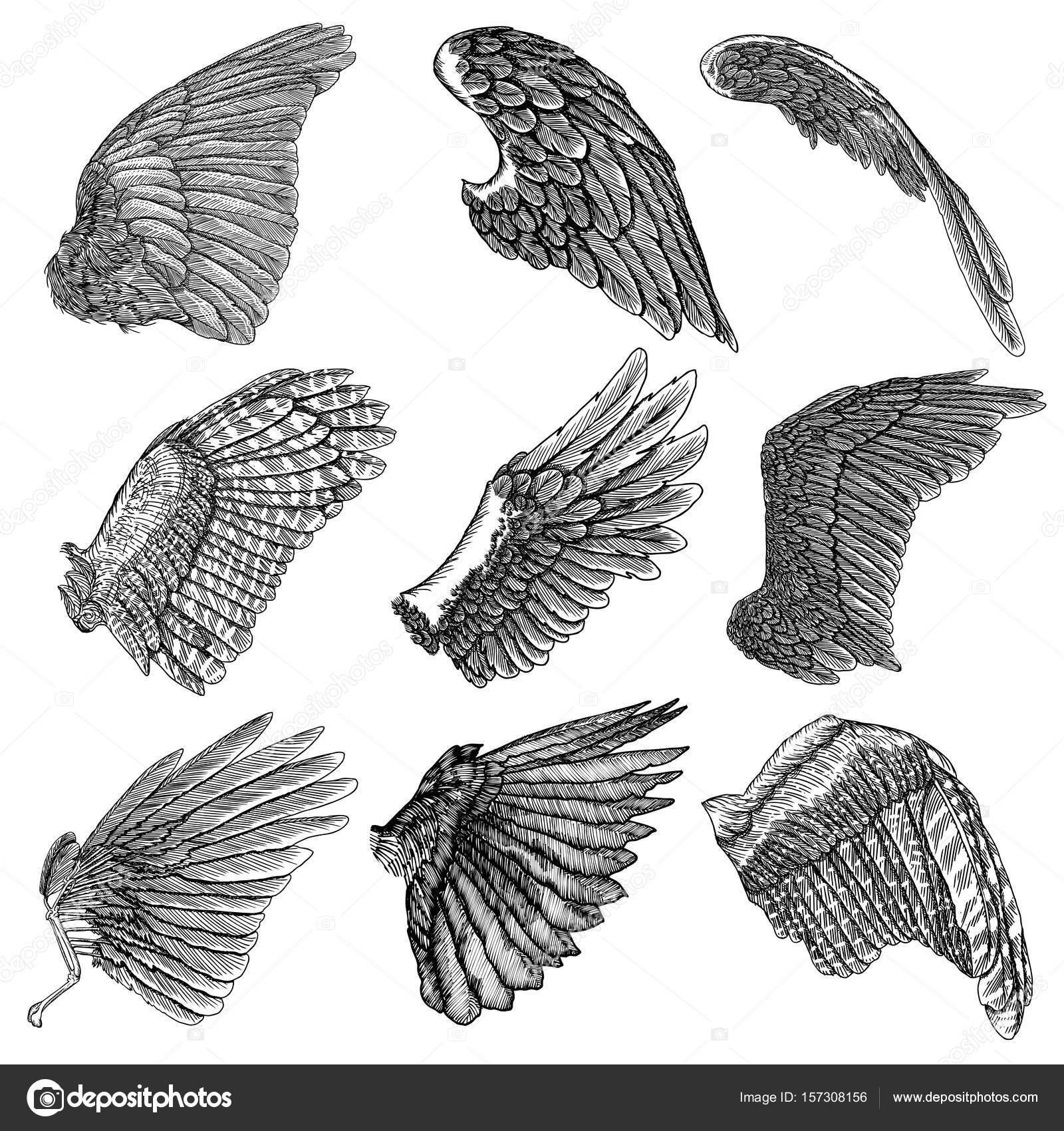 手には鳥の羽のイラストが描かれました ストックベクター